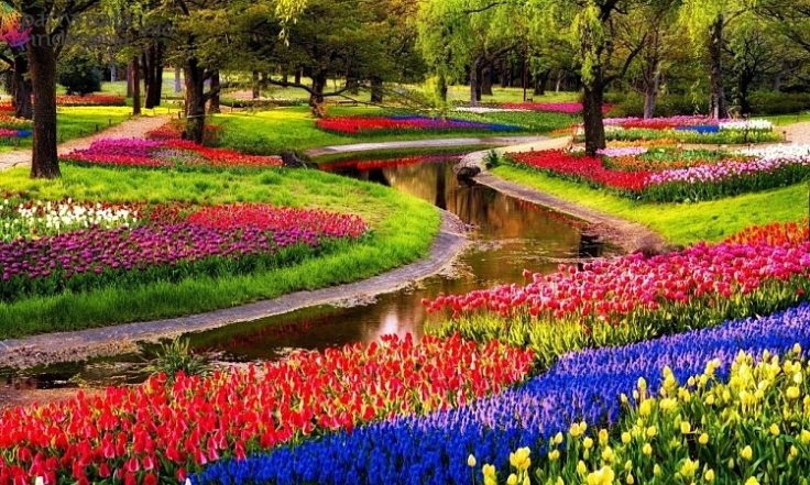 Keukenhof : The Garden of Europe